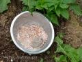 2014.04.26_compost-de-bouse-biodynamie5